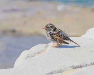 Little Sparrow drying off