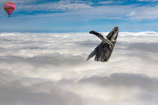 humpback whale breaching in clouds in the sky with a baloon in the blue
