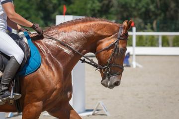 Horseman rides on the chestnut horse rides on a hippodrome close-up