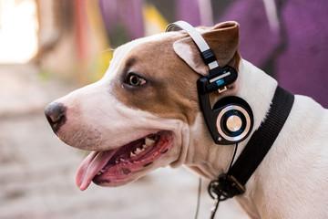 Dog listening music