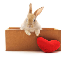 Red bunny in box.