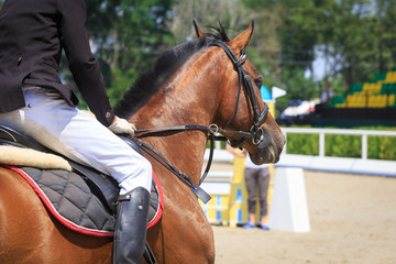 Horseman sits on a horse waiting for the start of the competition against the background of the grandstands