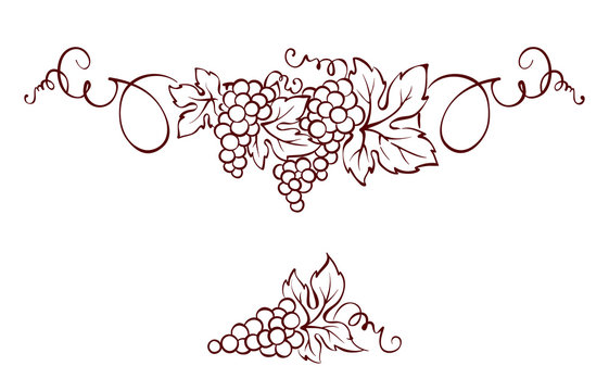 Grapes / Vector illustration, vintage design element