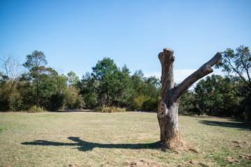 Landscape in Melbourne