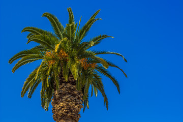 Summer wallpaper concept view of tropic south landscape tree palm on empty blue sky background, copy space