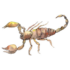 Exotic scorpion wild insect in a watercolor style isolated. Background illustration set.