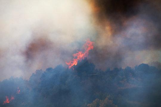 Waldbrand Buschbrand Feuer