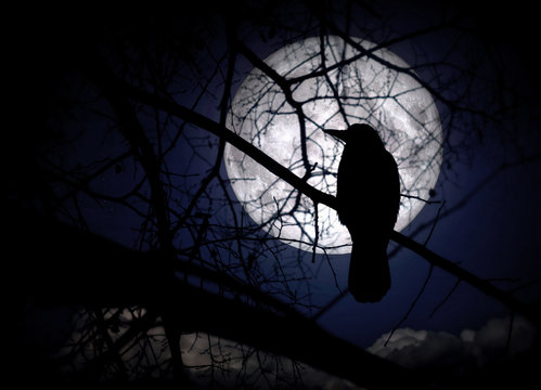 Raven on branches in a moonlit night