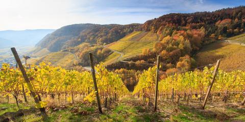 Weinberge bei Dernau an der Ahr im Herbst Fototapete