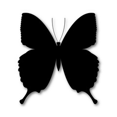 Black butterfly circuit, shape illustration. Vector illustration of butterfly with shadow in flat design, isolated in white background.
