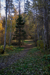 forest details in late autumn at countryside
