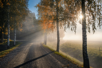 Scenic landscape with road, birches, sunlight and sun rays at autumn morning in Finland