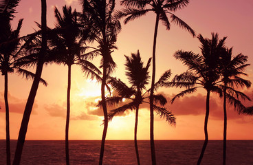 Palm tree silhouettes against pink sky at sunrise over sea. Warm tropical summer morning.