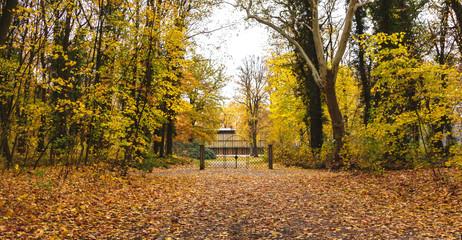Beautiful romantic alley in a park, autumn natural background. Bench in autumn park. Autumn landscape. Autumn trees.