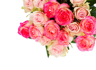 Rose fresh flowers in two shades of pink isolated on white background