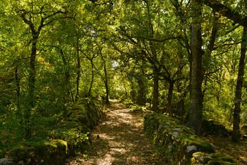 Chemin de pierres et de mousse en forêt lumineuse, Occitanie
