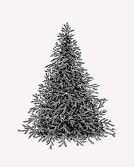 Hand drawn illustration of evergreen tree. Botanical vinage fir tree.