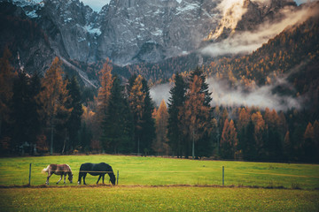 Horses grassing in fairy-tale Landscape in sunlit with Majestic Rock Mountain on background. Wild area. Slovenia, Julian Alps. Creative imag