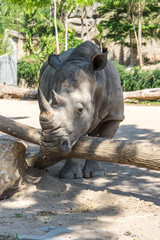 View of rhinoceros