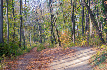 Nature Walk Through Forest