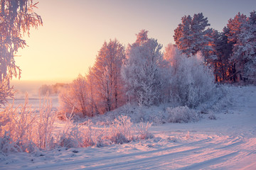 Winter landscape with frosty trees in bright morning sunlight.