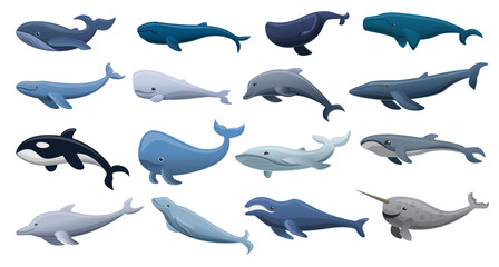 Whale icon set. Cartoon set of whale vector icons for web design