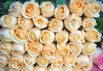Fresh beige roses in a bouquet with water drops.