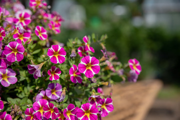 Beautiful blooming flowers in garden, summer background