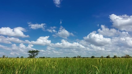 Fototapete - 4k timelapse sky cloud over field green, rice field