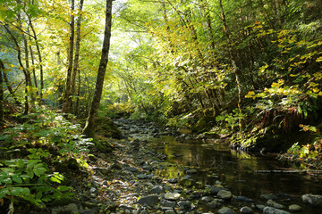 creek in the forest during autumn
