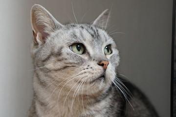 猫 ぴーちゃん