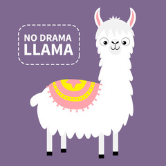 No drama llama. Alpaca animal. Cute cartoon funny kawaii character. Childish baby collection. Fluffy hair fur. T-shirt, greeting card, poster template print. Flat design. Violet background.
