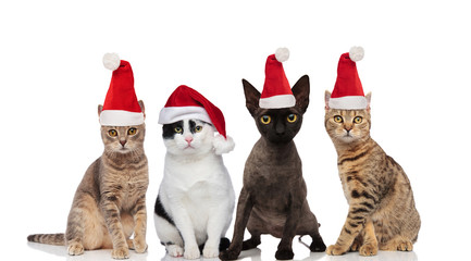 cute group of four santa cats of different breeds