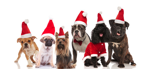 large team of six adorable santa dogs sitting and standing