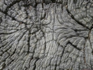 Photo sur Toile Les Textures Beautiful patterned wood decay