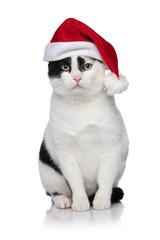 adorable black and white metis cat with santa cap sitting