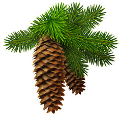 A branch of fir with two cones. High detailed realistic Christmas illustration.