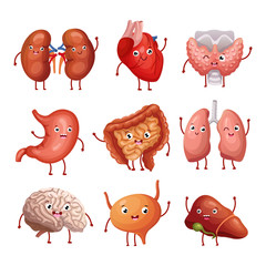 Cute cartoon human organs. Stomach, lungs and kidneys, brain and heart, liver. Funny inner organs vector anatomy characters brain and heart, liver and internal organ illustration