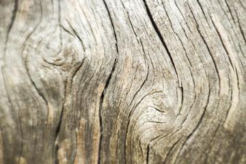 wood texture tree old