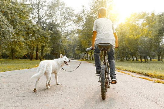 Boy child on a bike with white dog husky on the road in the park, back view