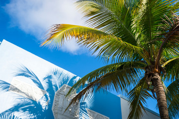 Bright tropical background of palm tree shadows on colorful Art Deco architecture in South Beach, Miami, Florida, USA
