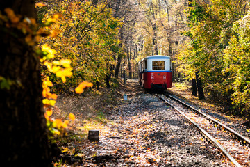 Railroad tracks in the forest between trees on autumn with yellow fallen leaves