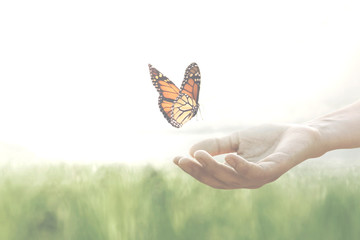 colorful butterfly leans confident on a woman's hands