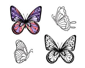 Butterfly Set. Vector illustration. Elegant butterfly logo for feminine business.