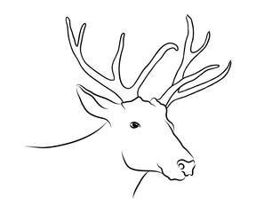 Stag deer head sketch. Head of deer doodle black and white vector graphics drawing. Wildlife reindeer animal illustration, profile hand drawn beast portrait, monochrome background.