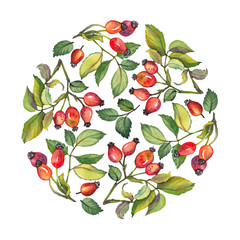 Watercolor circle design with red rosehips berries and green leaves. Hand drawn illustration on white background.