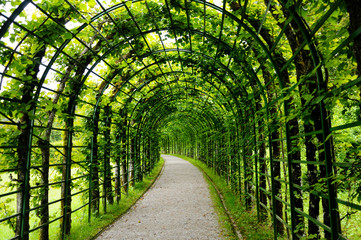Green arched alley in the park of Linderhof Palace. Bavaria, Germany.