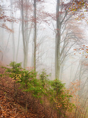 Autumn scenery in a forrest