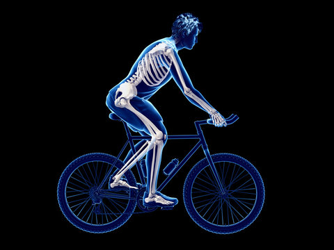 3d rendered illustration of a cyclists skeleton