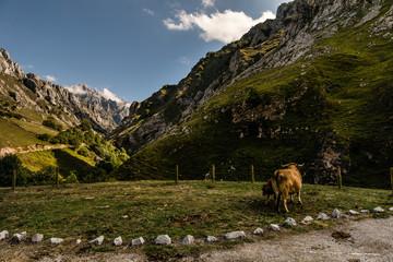 Picos de Europa. Asturias (Spain)
